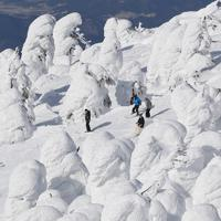 巨大に成長した樹氷の間を滑るスキーヤー=山形市の蔵王温泉スキー場で2015年2月7日、佐々木順一撮影
