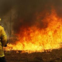 森林火災の消火活動に当たる消防士=9日、AP