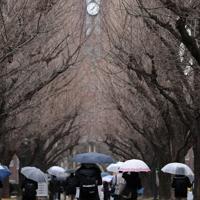 最後の大学入試センター試験を迎え、雨が降るなか会場に向かう受験生ら=東京都文京区の東京大学で2020年1月18日