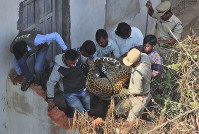 Indian wildlife officials carry a tranquillized leopard that was found on the terrace of a house in Shadnagar 55 kilometers from Hyderabad, India, on Jan. 20, 2020. (AP Photo/Mahesh Kumar A.)