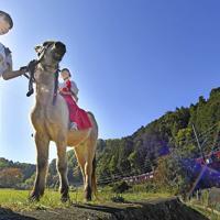 散歩をする吉川八幡神社の御神馬「いづめ」=大阪府豊能町で、山田尚弘撮影
