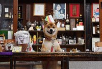 Fuku, a Shiba Inu, is seen welcoming customers at the counter of the