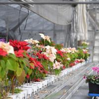 冬場は氷点下になる南阿蘇村。職員が手入れしている温室では、現在も花々が咲いている=熊本県南阿蘇村で2020年1月17日、津村豊和撮影