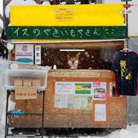 雪が舞う中、「犬の焼きいも屋さん」の店番をする柴犬のケン=札幌市清田区で2020年2月6日、貝塚太一撮影