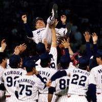 1997年度日本シリーズ「ヤクルトスワローズ・西武ライオンズ第5戦」ヤクルトが万全の継投策で西武を零封、4勝1敗で2年ぶりにシリーズを制し、野村克也監督を胴上げするヤクルトナイン=東京・神宮球場で