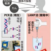 新型コロナウイルス検査の流れ