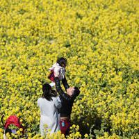 早咲きの菜の花畑で散策を楽しむ親子=兵庫県淡路市で2020年2月11日、小出洋平撮影