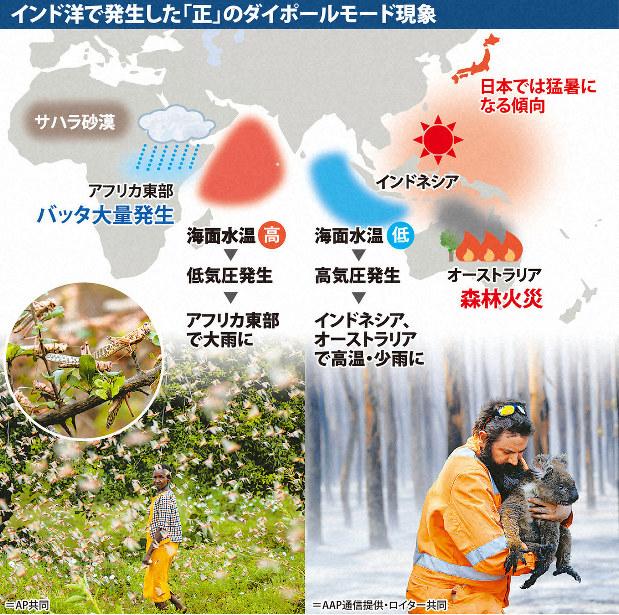 バッタ大量発生 日本