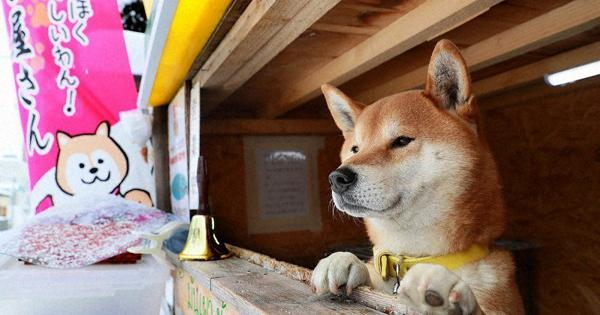 Roast of the town: Dog running sweet potato stand in Hokkaido warms hearts - The Mainichi