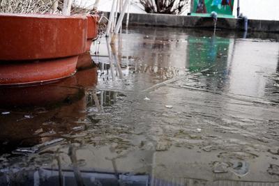 雪も舞った池の水面