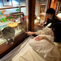 布団に寝転んだまま、猫を眺められるねこ旅籠=大阪市中央区で、望月亮一撮影