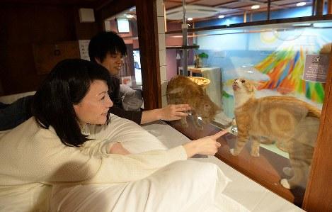 Visitors enjoy looking at cats while lying on futons at the Neko Hatago hostel in Osaka's Chuo Ward. (Mainichi/Ryoichi Mochizuki)
