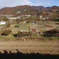 紅葉のころの浜田さんや近所の人々の畑。持ち主に応じ作物や農法、畑の外観もさまざまだ=2019年11月24日、藤原章生撮影