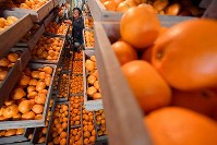 Mandarin oranges, commonly known in Japan as mikan, are seen in storage drawers in Asuka, Nara Prefecture, in this recent photo. (Mainichi/Naohiro Yamada)