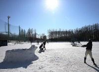 一面雪で真っ白になったグラウンドで練習する帯広農の選手たち。センバツ出場を祈願して作られた牛の雪だるまも鎮座する=北海道帯広市で2020年1月25日、貝塚太一撮影