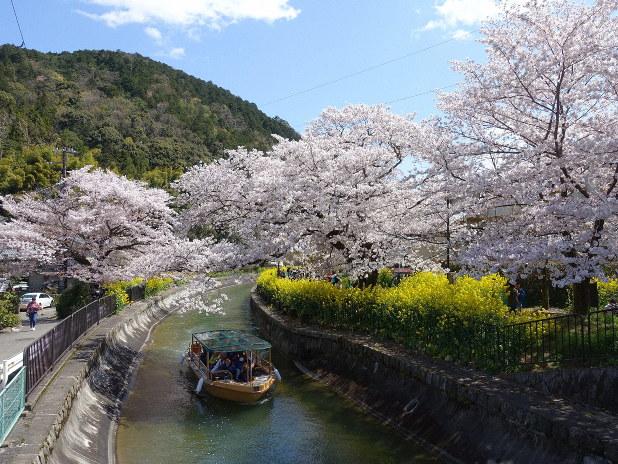 桜と新緑の回廊巡る びわ湖疏水船、28日から春季運航 - 毎日新聞