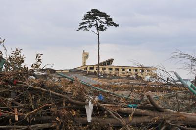 約2キロにわたって約7万本の松林と砂浜が続いていた景勝地、高田松原。たった1本だけ残った松の木=岩手県陸前高田市で2011年3月25日午後4時1分、西本勝撮影