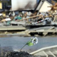 海岸の盛り土に供えられた造花=宮城県石巻市で2011年3月28日午後0時57分、梅村直承撮影