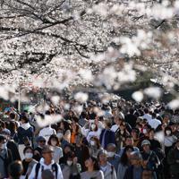 5分咲きのソメイヨシノを、マスク姿で歩きながら楽しむ人たち=東京都台東区の上野公園で2020年3月21日午後3時3分、小川昌宏撮影