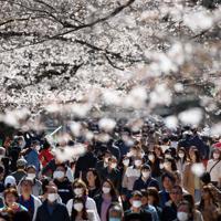 マスク姿で歩きながら花見を楽しむ人たち=東京都台東区の上野公園で2020年3月21日、小川昌宏撮影