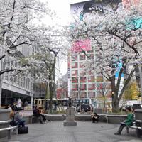 新型コロナウイルスの感染拡大を受けた「外出自粛」が始まり、待ち合わせなどの人がまばらなJR渋谷駅前のハチ公周辺=東京都渋谷区で2020年3月28日午前11時2分、竹内紀臣撮影