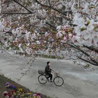 桜が見頃を迎えた隅田公園では「外出自粛」で人通りが少なかった=東京都台東区で2020年3月28日午後2時12分、長谷川直亮撮影