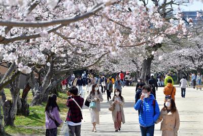 例年より人出が少ない舞鶴公園で桜の下を散策する来園者たち=福岡市中央区で2020年3月29日午後1時43分、森園道子撮影