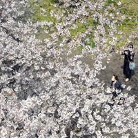 例年より人出が少ない舞鶴公園で桜の下を散策する来園者たち=福岡市中央区で2020年3月29日午後0時58分、森園道子撮影