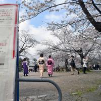 桜が見ごろを迎えている京都・円山公園。しだれ桜の夜間ライトアップが一度は始まったが、その後の新型コロナウイルス感染拡大を受けて急きょ中止となった。マスクの着用や宴会の自粛を促す張り紙もあちこちに見られた=京都市東山区で2020年3月29日午後2時34分、川平愛撮影