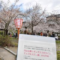 夜間ライトアップも中止となった=京都市東山区で2020年3月29日午後1時1分、川平愛撮影