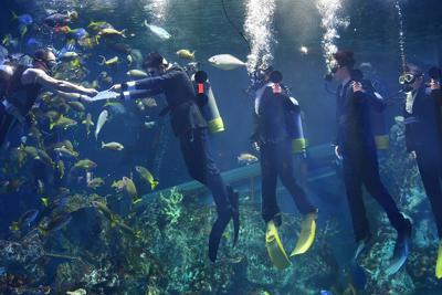 アオウミガメやハリセンボンが泳ぐ水槽内で辞令を受け取る新入社員=三重県鳥羽市で2020年3月31日午前9時37分、兵藤公治撮影