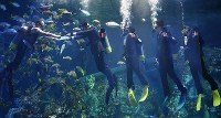 New Toba Aquarium employees receive letters of appointment at a company entrance ceremony in a fish tank in the city of Toba, Mie Prefecture, on March 31, 2020. (Mainichi/Koji Hyodo)