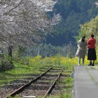 熊本地震から間もなく4年。南阿蘇鉄道長陽駅は今も不通区間だが、桜の名所として親しまれている。南阿蘇鉄道は2023年夏の全線再開を目指して復旧工事が進められている=熊本県南阿蘇村で2020年4月7日、津村豊和撮影