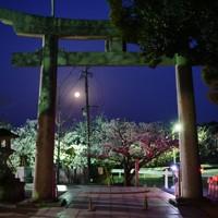 宮地嶽神社から見えた満月=福岡県福津市の宮地嶽神社で2020年4月8日午前5時19分、須賀川理撮影