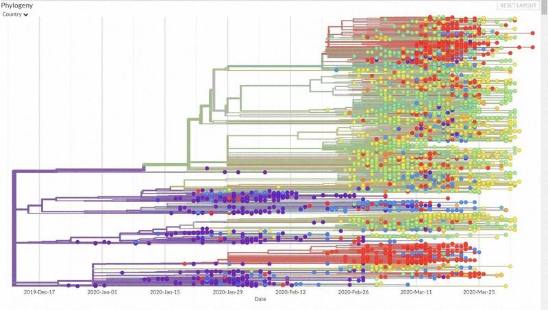 新型コロナの変異パターンは三つ「広東、日米豪」「武漢」「欧州」ゲノム解析進む