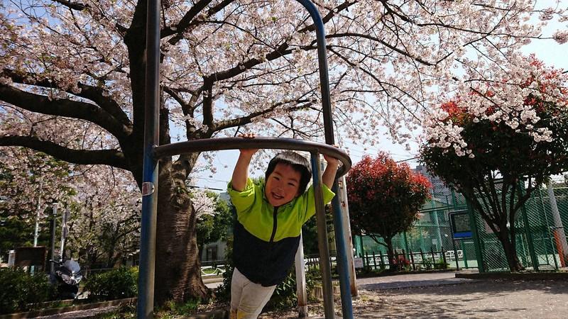 満開の桜に目もくれず、公園の遊具ではしゃぎまわる健=東京都墨田区の自宅近くの公園で2020年3月、柳沢茜撮影