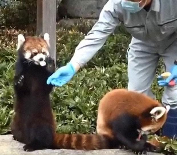 上野 動物園 コロナ