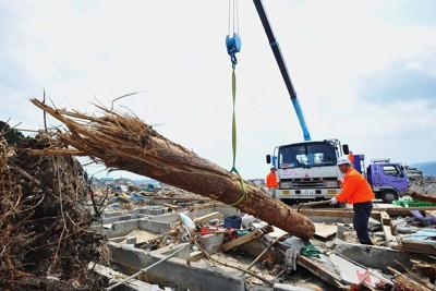 津波で流され市内に散乱した名勝「高田松原」の松を回収するボランティアたち=岩手県陸前高田市で2011年5月4日午前11時8分、竹内紀臣撮影