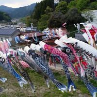 九州北部豪雨の被災地に泳ぐこいのぼり=福岡県朝倉市杷木松末で2020年4月28日、小型無人機で田鍋公也撮影