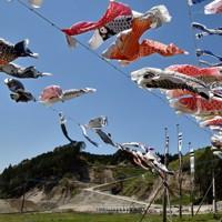 九州北部豪雨の被災地に泳ぐコイノボリ=福岡県朝倉市杷木松末で2020年4月30日、田鍋公也撮影