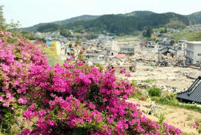 被災地を見渡す高台で花を咲かせたツツジ=岩手県陸前高田市で2011年5月17日午後0時10分、幾島健太郎撮影