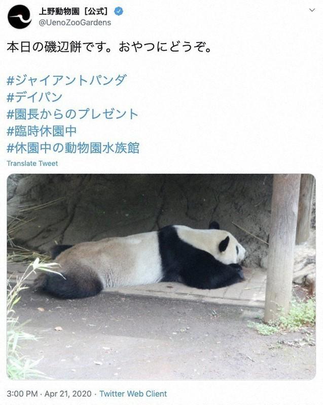 上野 動物園 デイパン 東京・上野動物園「パンダのもり」の一般公開始まる