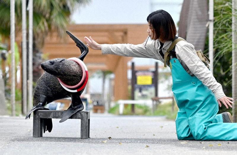 コロナ 王国 神戸 どうぶつ 2020年10月12日から神戸どうぶつ王国はクラウドファンディングで「花と動物と人との懸け橋プロジェクト」をスタートします