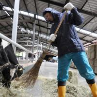 広い牛舎のすみで身を寄せ合う6頭の牛の世話をする農家=福島県楢葉町で2016年5月21日、栗田慎一撮影