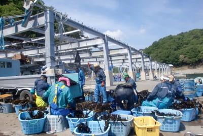 津波の被害で鉄骨だけになった作業場で働く漁師たち=岩手県宮古市の重茂漁港で2011年5月26日、若狭毅撮影