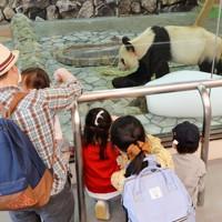 一部営業再開で公開されたジャイアントパンダの「永明」を見る家族連れ=和歌山県白浜町で2020年5月21日午前11時12分、北村隆夫撮影