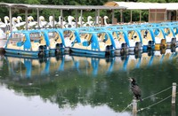 Paddle boats are left empty at Inokashira Park in Tokyo's Mitaka Ward on May 26, 2020, as the docking area remains closed even though the state of emergency declaration was lifted the day before. (Mainichi/Naotsune Umemura)