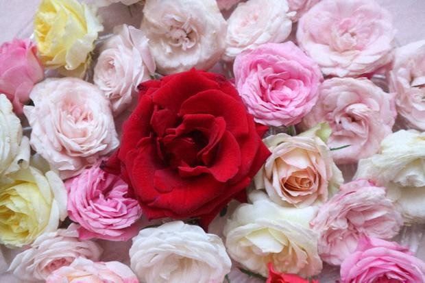 オンラインショップ「Flower cycle marche」にて販売していたバラ風呂用の高級バラ(筆者撮影)