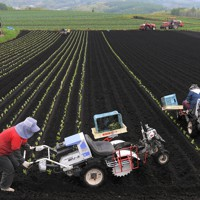 キャベツ農家の畑で農機具を使って苗の定植作業をする望月由香利さん。村内の観光ホテルで働いていたが、新型コロナウイルスの影響で休業状態となり、農家のアルバイトとして働いている=群馬県嬬恋村で2020年5月24日、手塚耕一郎撮影