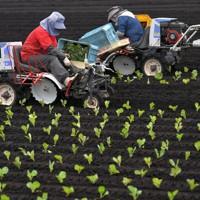 キャベツ農家の畑で農機具を使って苗の定植作業をする望月由香利さん(左)=群馬県嬬恋村で2020年5月24日、手塚耕一郎撮影